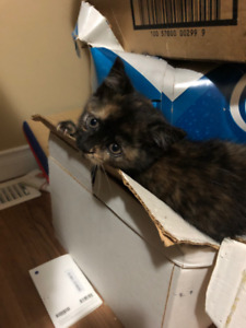 Kittens looking for a forever home
