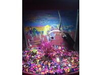 Pink Cold Water Fish Tank with Filter/Lights/Gravel