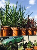 Flash plant sale!