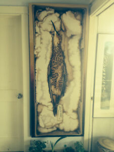 Newfoundland Art Painting of Eskimo curlew by Helen Gregory