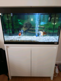 Fluval Complete Fish Tank with two Fancy Gold Fish Calico Orandas