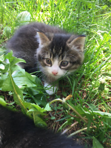 3 cute kittens looking for new family