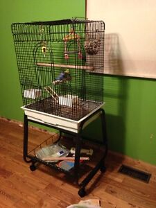 Bird cage for sale fits all birds