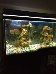 90 Gal. Wave Front Fish tank and Stand with equipment
