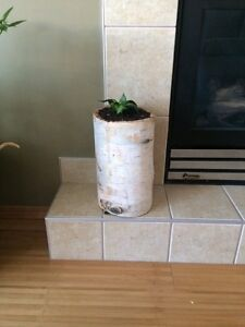 Planters - Real Birch