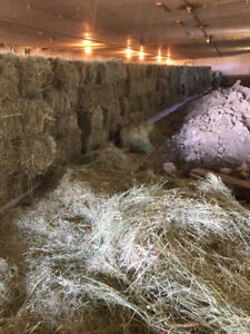 square grass hay bales