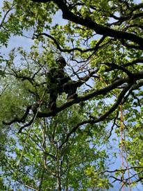 Hegde,tree cutting and gardening