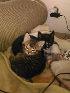 2 kittens for rehoming