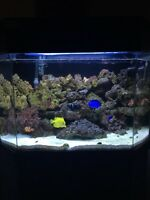 40 gallon saltwater fish tank or best offer