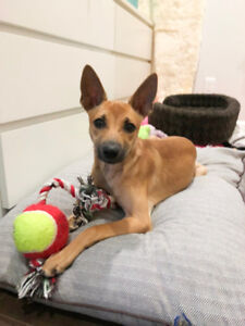 6 months shy puppy looking for a home