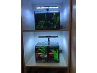 2x Betta Duo Fish Tank and Stand