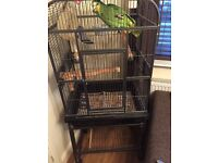 Orange wing Amazon Parrot and cage for sale