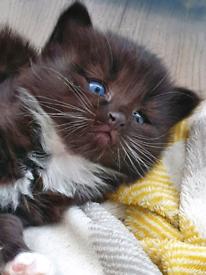 3 beautiful kittens, Ready now!