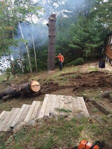 Tip Top Tree Removal and Services Cambridge Kitchener Area image 10