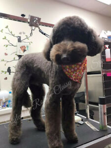 Dog Grooming in Shawnessy
