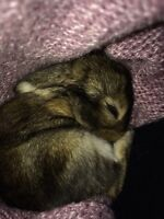 FREE BUNNIES FOR PETS