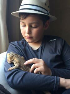 Bearded Dragon and Habitat to re-home
