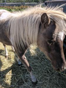 Beautiful unique mare for sale