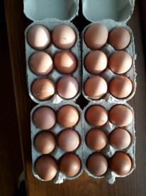 Fresh free Eggs