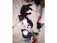 Two kittens left!