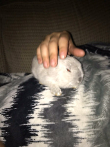 LOOKING FOR LIVE TRAPS /CAGES! Trying to catch abandoned bunnies