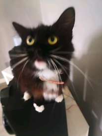 female adult cat 5 year old