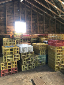 Chicken Transport Crates