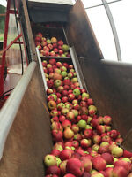 Apple and Pear Pressing