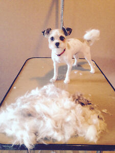 Dog grooming in Edmonton AND Sherwood Park!