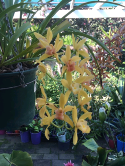 Beautiful Orchids For Sale