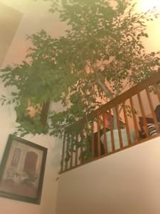 plante âgé de 50 ans et + doit vendre déménagement
