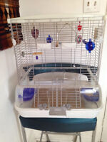2 Budgerigars+CAGE