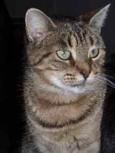 Female Tabby Cat