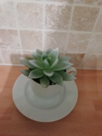 Succulent in a coffee cup