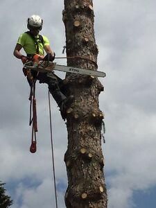 Affordable Arborist - 25% off all jobs booked by Oct 31st