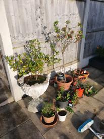 Free plants and plant pots leyland