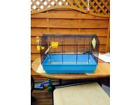 2 Budgies and cages for sale £35