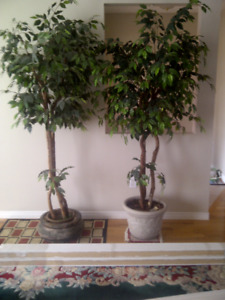 7' Artificial Ficus Tree - Look real