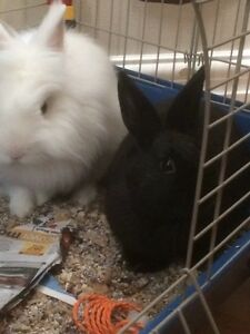 Bunnies Looking for a Loving Home