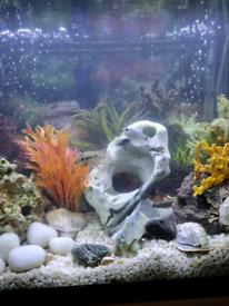 FISH TANK BETTA 90LT FOR SALE TROPICAL