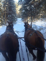 Sleigh Rides and Fishing Excursions