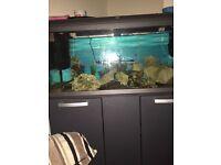 Fish tank n full setup