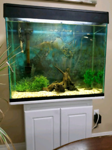 Fish tank with accessories, white cabinet, lights, cover