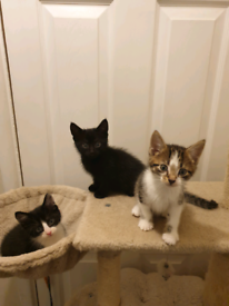 3 beautiful kittens ALL RESERVED