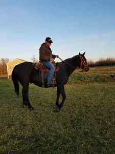 Horse for sale awesome deal one in a million