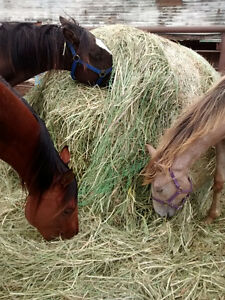 Buying Hay in the St. Albert/Morinville area