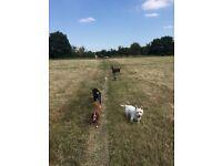 Dog walker needed!