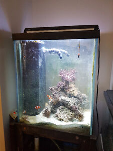 custom 55 gallon salt water reef fish tank