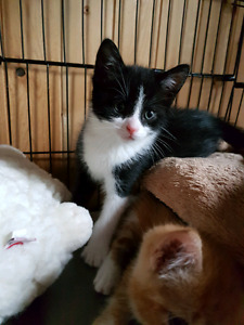 Many kittens available @Pets Need Love 2 rescue