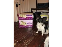 Puppy training pads (tinkle pads) in Shepherds Bush